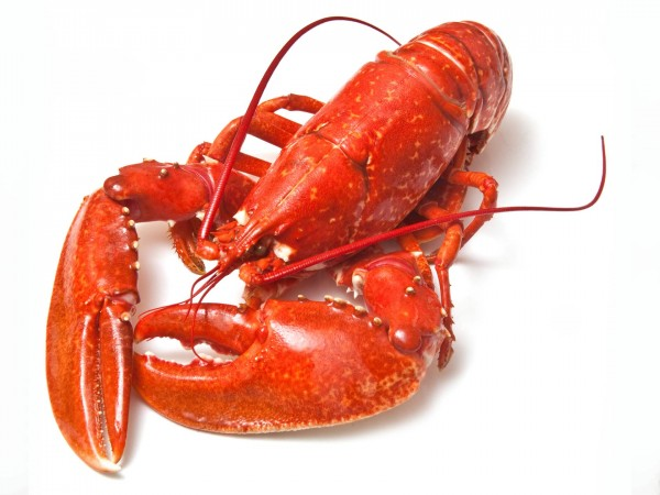 Cooked-Native-Lobster-new-website_600x600